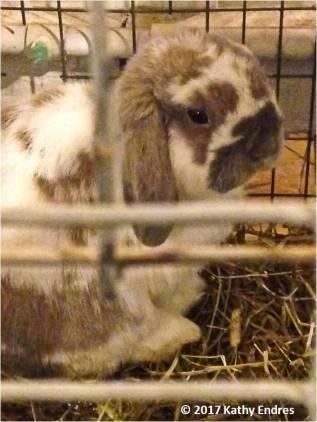SF13_Bunny