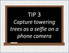 Chalkboard_Tip3_ToweringTreesAsSelfie