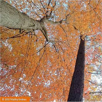 KathyEndres_OrangeTreeSelfieFinal