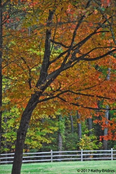 Original fall photo 1