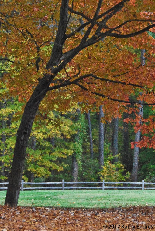 Heavily cropped fall photo 2