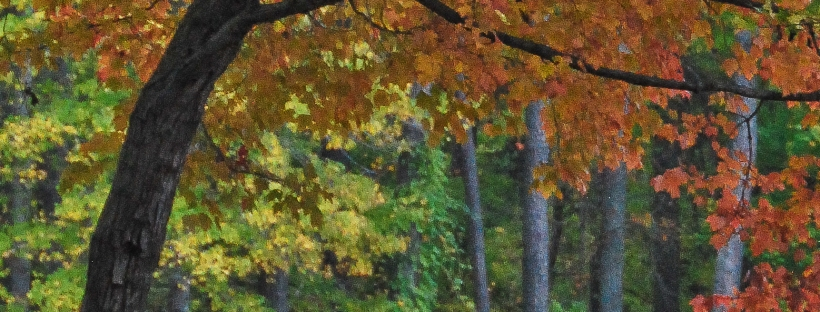 Heavily cropped fall photo 2
