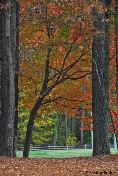 Original fall photo 2