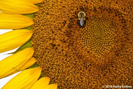 KathyEndres_Sunflowers5